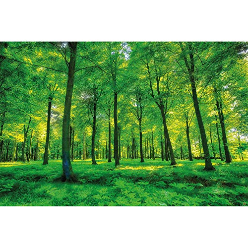 GREAT ART Fototapete – Bäume – Wandbild Dekoration Natur pur Landschaft Wald Lichtung Sommer Entspannung Sonne Pflanzen Flora Forst Farne AST Foto-Tapete Wandtapete Fotoposter Wanddeko (210x140 cm)