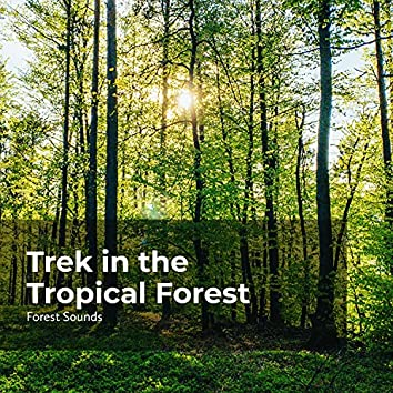 Trek in the Tropical Forest