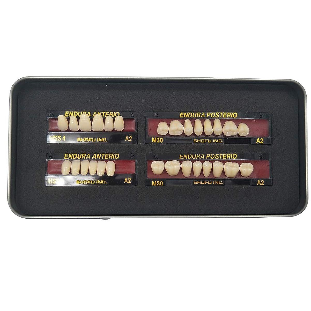 コウモリ線任命SHINAHUATONG 1ボックス/セット歯科用 義歯 サイズM30 カラーA2 28枚/セット