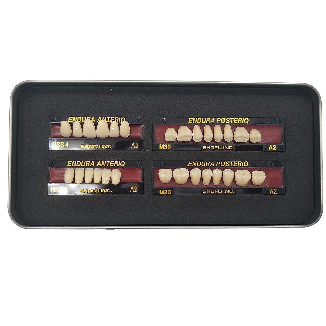 詩共感する以前はSHINAHUATONG 1ボックス/セット歯科用 義歯 サイズM30 カラーA2 28枚/セット