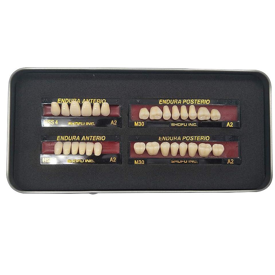 自動車断言する繊維SHINAHUATONG 1ボックス/セット歯科用 義歯 サイズM30 カラーA2 28枚/セット