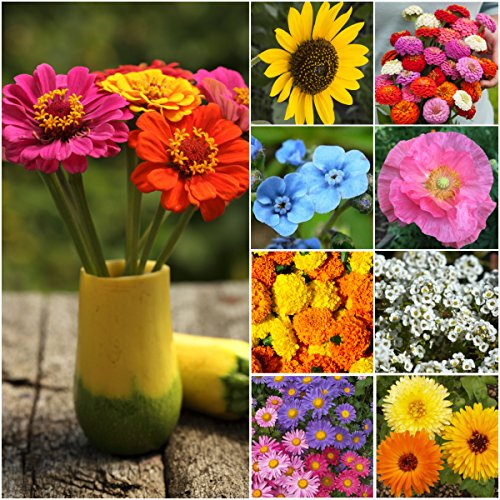 Seed Needs, Butterfly Attracting Annual Cut Flower Wildflower Mixture (100% Pure Live Seed) Bulk Package of 30,000 Seeds