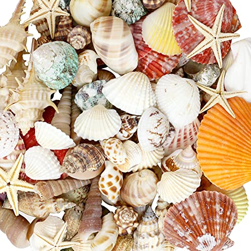 WEOXPR Mixed Sea Shells, 100+ Pcs Beach Seashells Starfish, Various Sizes Ocean Seashells for Fish Tank Vase Fillers, Beach Theme Party Wedding Decor, Candle Making, DIY Crafts, Home Decorations
