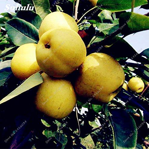 Livraison gratuite 20 pcs Bonsai graines Pear Mini graines de poirier super doux plantes en pot la qualité des graines de fruits pour le jardin à la maison