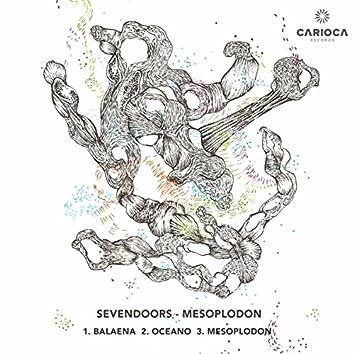 Mesoplodon