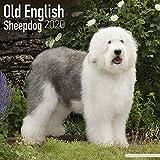 Old English Sheepdog Calendar 2020 - Dog Breed Calendar - Wall Calendar 2019-2020