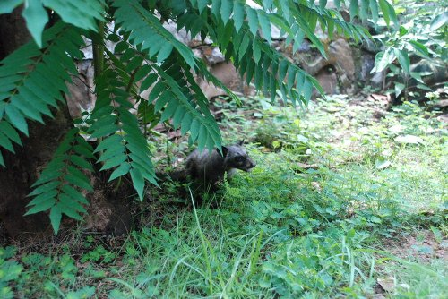 Kopi Luwak 100% Sortenrein Katzenkaffee Premium Qualität von freilebenden Luwaks in eigener Plantage Java Gourmet Kaffee Röstkaffee Organic Civet Coffee Gemahlen 50 g, von frei lebenden Tieren