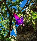 200 Pcs Bright Purple Angel Trumpet Seeds Flower Garden Decor
