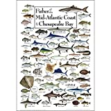 Earth Sky + Water - Fishes of The Mid-Atlantic Coast & Chesapeake - Poster