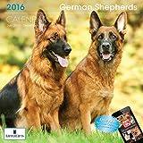 LittleGifts Kalender 2016 Deutscher Schäferhund (1242)
