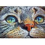 gatos ojos azules