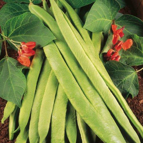 Suttons Seeds 150025 Semences de Haricot d'Espagne variété enorma