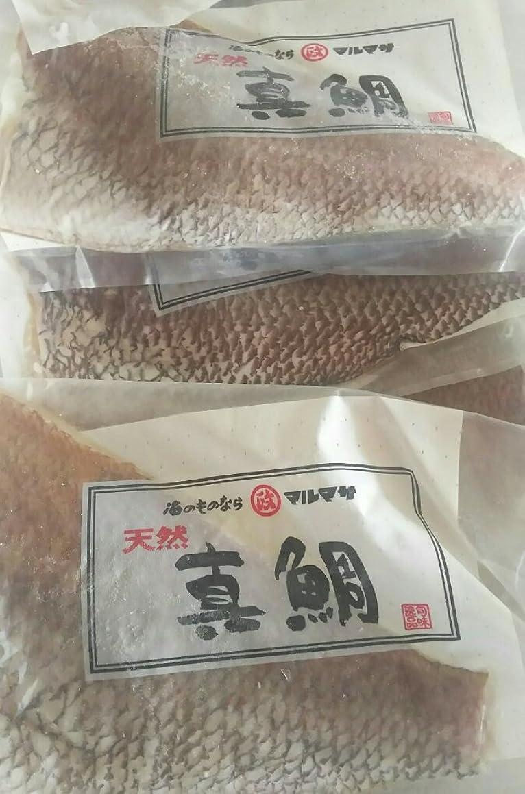 資源終了しましたバルク国産(長崎県)天然真鯛フィーレ 9kg(枚300-400g)業務用 刺身 タイフィレ