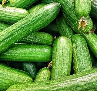 beit alpha cucumber growing