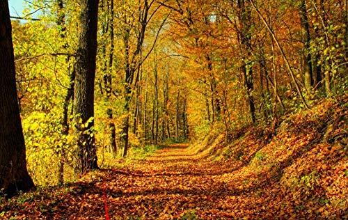 Fotobehang - Herfst diep bos Gouden Landschap Niet-geweven muurschildering voor Premium Art Print Poster Picture Design Moderne Slaapkamer Woonkamer Woonkamer Woondecoratie 250x175 cm/98.42x68.89 inch - 5 Strips