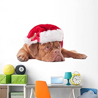Wallmonkeys WM359664 Dog Dressed Like Santa Peel and Stick Wall Decals (72 in W x 48 in H), Colossal