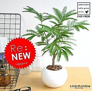 LAND PLANTS エバーフレッシュ 白色丸型陶器