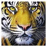 12x16 Pulgadas DIY Diamante Pintura por Números Kits for Adultos Taladro Completo del Tigre Pintura con Diamantes Rhinestone Dot Arte del Arte ZSH 9-25 (Size : Round Drill)