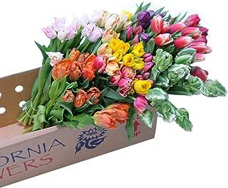 Stargazer Barn 100 Assorted Fancy Tulips Wholesale DIY Flowers - Farm Direct