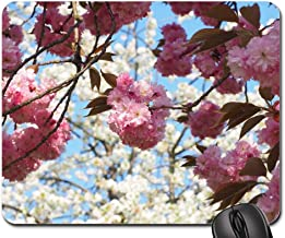 Mouse Pad - Cherry Blossom Japanese Cherry Smell Blossom Bloom 9