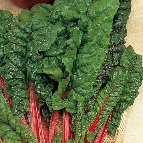 Suttons Seeds Mangold Chard Samen Rhabarber 151723