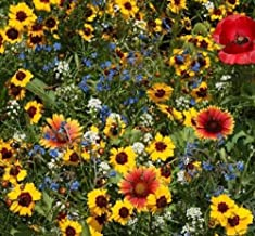 3750 Seeds Late Blooming Wildflower Mix - Many Sizes Fall Color Blooms