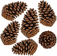 """Eidicjsoo 12 Pcs Christmas Pine Cones 3"""" to 4.3"""" All Natural Pine Cones Wood Frosted Pine Cone Ornaments for Decorating an..."""