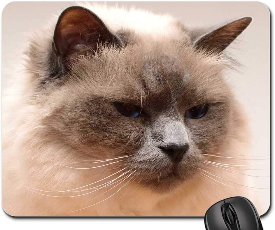 Mouse Pad - Cat Face Head Moustache Mail order Domestic We OFFer at cheap prices Race Pet