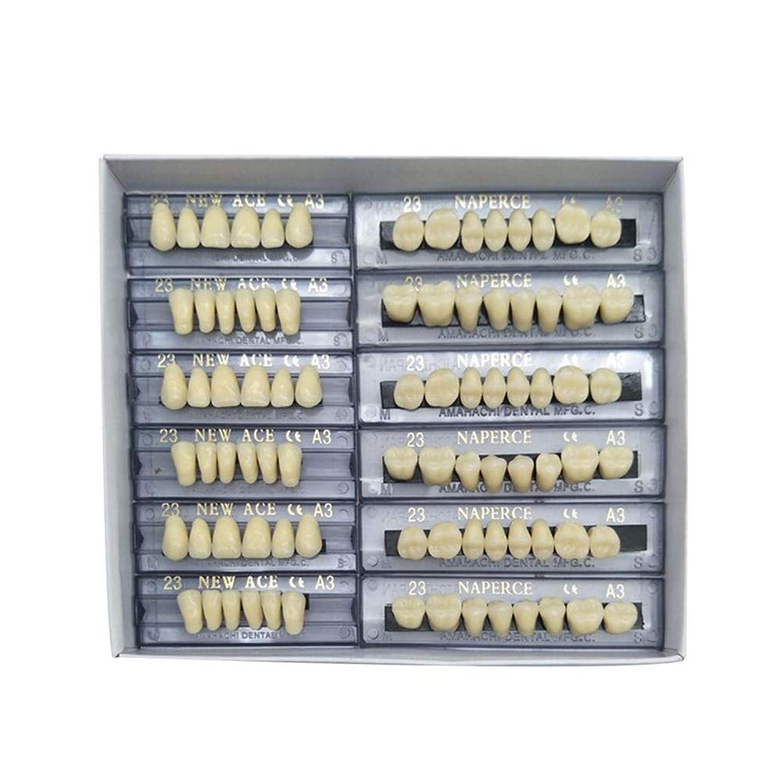 ピザドリンク肌SHINA 12セット合成ポリマー樹脂義歯 上+下歯科セット (A3)