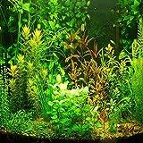 (AGS1000Ambizu 1000 semillas de hierba de acuario, semillas acuáticas de agua (mezcla incluida 15 tipos)