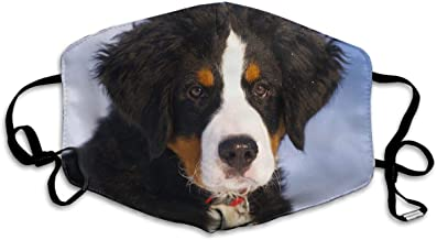 Daawqee Maschera,Bocca Maschera, Unisex Bernese Mountain Dog Reusable Face Mouth Cover Mask Windproof Mask Breathable 7 X 4.3 in