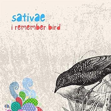 i remember bird