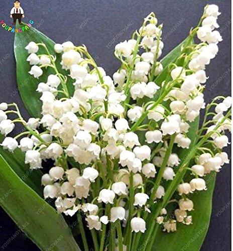 100pcs 20 types d'orchidées Graines vivaces Fleurs Plantes ornementales en pot Bansai Semences pour balcon et cour plante Diy jardin kaki foncé