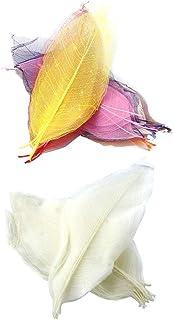 100Pcs Natural Magnolia Skeleton Leaf Leaves for Card Scrapbooking Bookmark