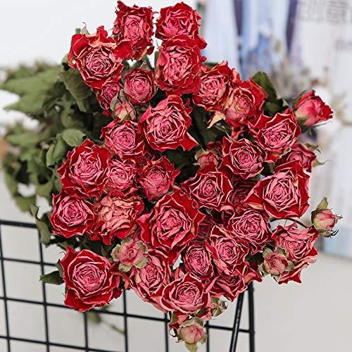 TZZD Getrocknete Blumen Weizen Kaninchenendstück Gras Getrocknete Blumen-Blumenstrauß DIY Perpetual Blumen Wohnzimmer Gradient Hochzeit Home Decoration (Farbe : 30 Flower Head)