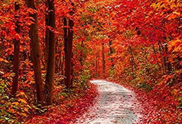 OERJU 5x3ft Fall Nature Backdrop Wild Forest Red and Yellow Leaves Woodlland Paths Photography Background Holiday Vacation Boys Girls Adults Portrait Photo Studio Booth Props Vinyl Wallpaper