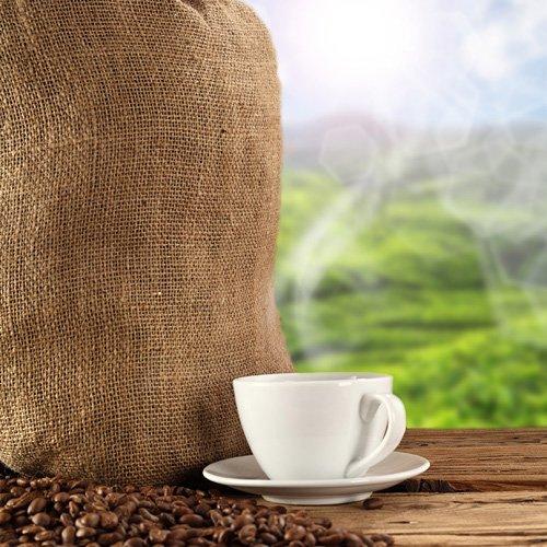 Mexiko Maragogype Kaffee 1000 g ungemahlen