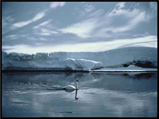 Snowy Lake with White Swan - Etched Vinyl Stained Glass Film, Static Cling Window Decal