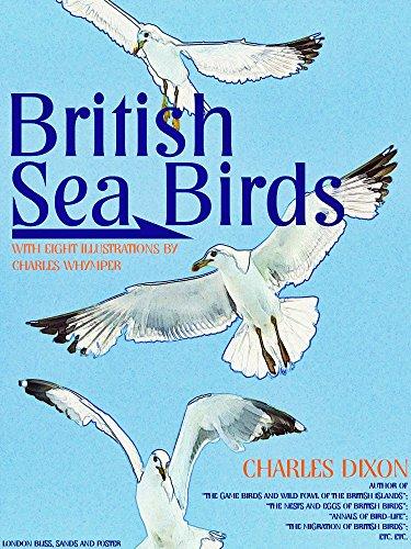 British Sea Birds (Illustrations) (English Edition)