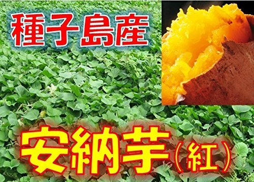 新芋(2020年産) 訳あり 種子島産 安納芋 「安納紅」 サイズ混合 1箱:約5kg入り  安納いも