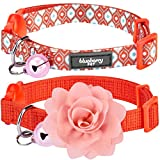 Blueberry Pet Lot de 2 Le Pouvoir du Tout-en-Un Orange Parfait Réglable Collier Anti-Fugue pour Chat avec Clochette & Fleur détachable, Tour de Cou 23cm-33cm