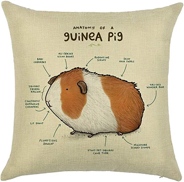 Xhonp Animal Anatomy Sketch Pillowcase Throw Pillow Cover For Home Decor Car Cushion 18 X 18 Inch Guinea Pig