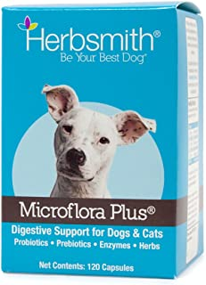 probiotics for dogs teeth