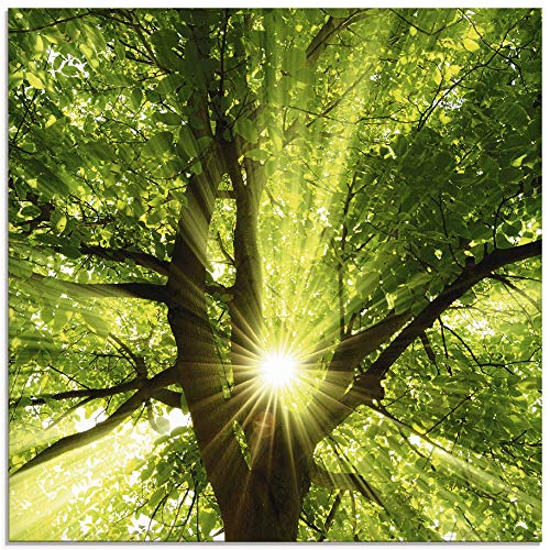 Artland Glasbilder Wandbild Glas Bild einteilig 50x50 cm Quadratisch Wald Natur Botanik Bäume Laubbaum Sonne Baum Sommer T5GQ