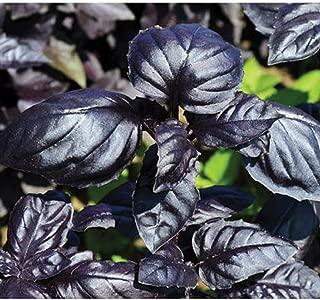 David's Garden Seeds Herb Basil Amethyst Improved SL9468 (Purple) 200 Non-GMO, Open Pollinated Seeds