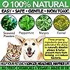 The Healthy Dog Co Poudre Dentaire pour Chiens et Chats | Plaque Clean | Hygiène et Soins Dentaires Naturels | Complément Alimentaire pour des Dents et Gencives Saines #1