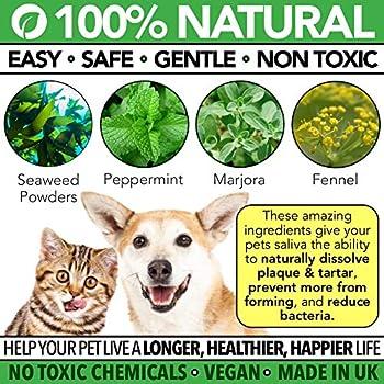 The Healthy Dog Co Poudre Dentaire pour Chiens et Chats | Plaque Clean | Hygiène et Soins Dentaires Naturels | Complément Alimentaire pour des Dents et Gencives Saines