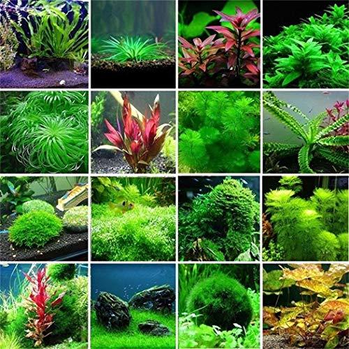 Keptei Samenhaus - 300 Stück unterschiedliche Sorten von Wasserpflanze Samen Wasserrasen Aquarium Moss Farn Aquatic Gras Samen Unterwassergras schnellwachsend