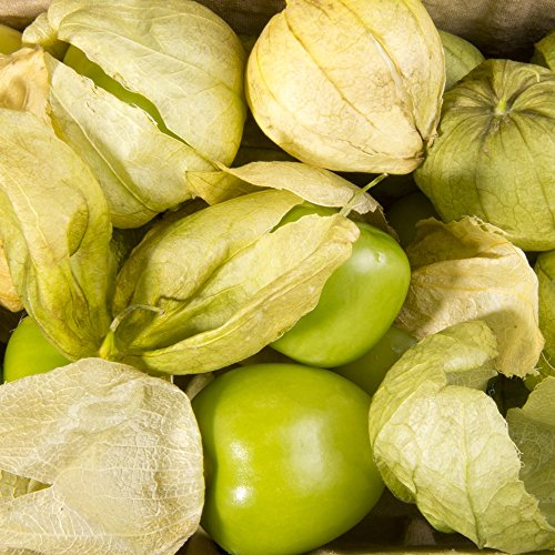 Tomatillo Samen Physalis ixocarpa,