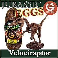 ジオワールド社 恐竜フィギュア ジュラシックエッグ 恐竜組立キット ベロキラプトル